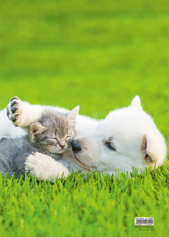 RNK 45320 Zeichenmappe A3 Hund und Katze