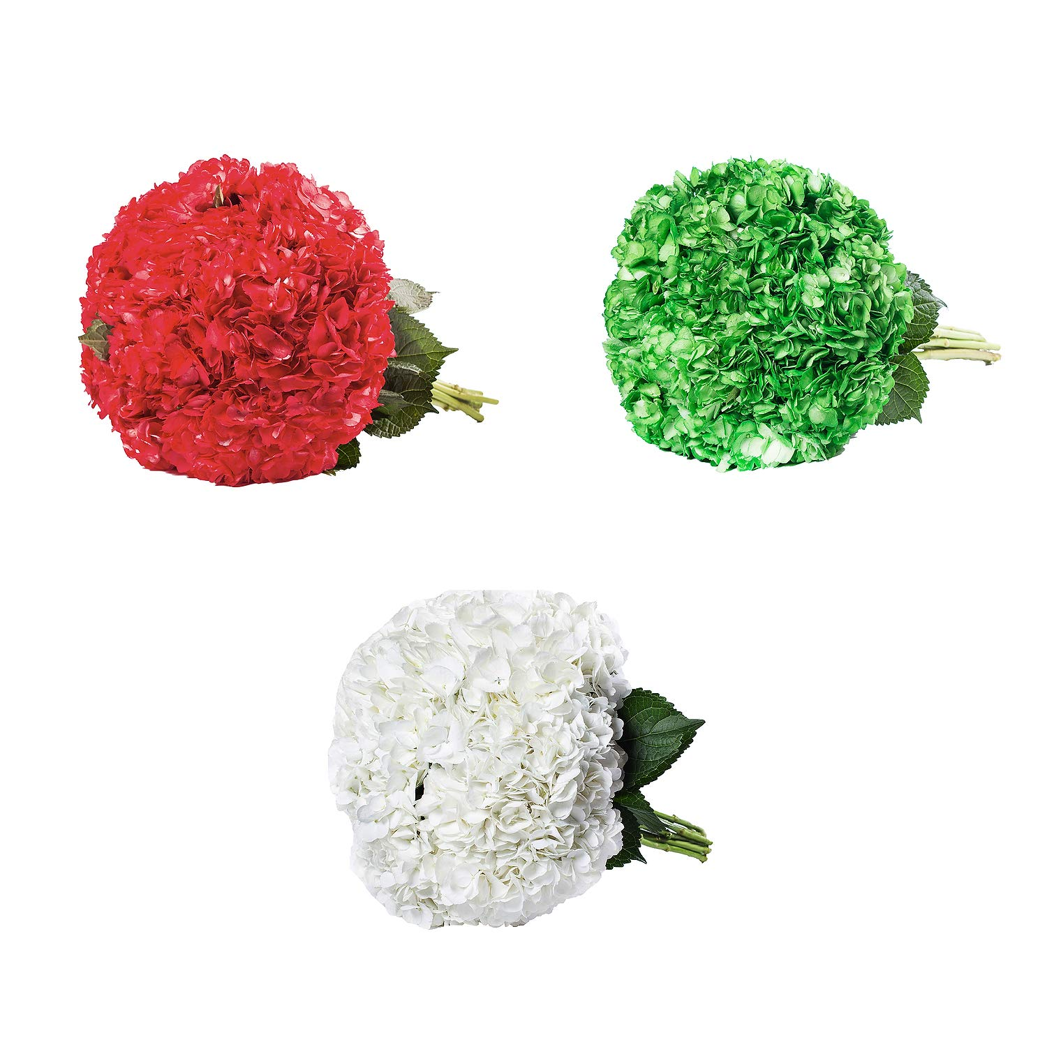 Farm Fresh Natural Painted Christmas Hydrangea combo - Pack 26 by Bloomingmore (Image #2)