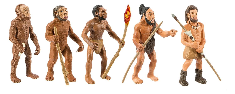 Safari Evolución del hombre 663816