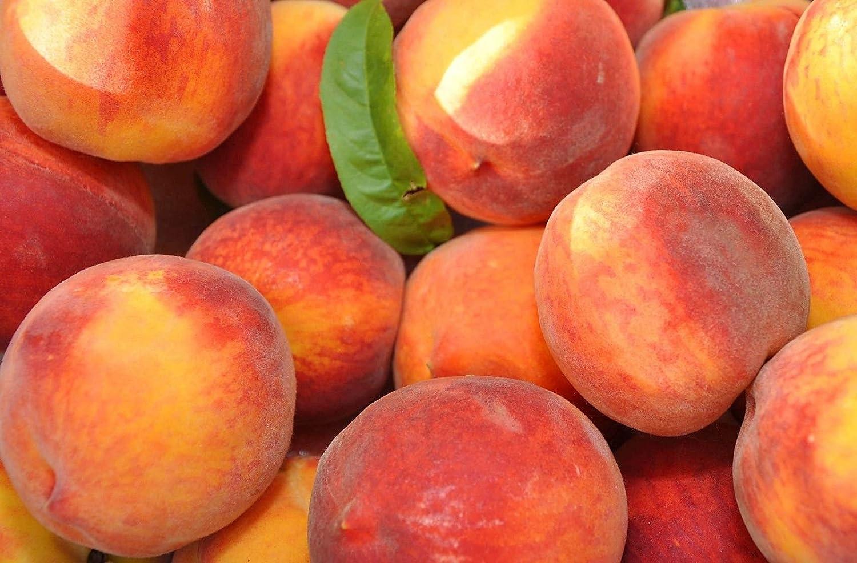Amazon com: Belle of Georgia Peach Tree Semi-Dwarf - Healthy