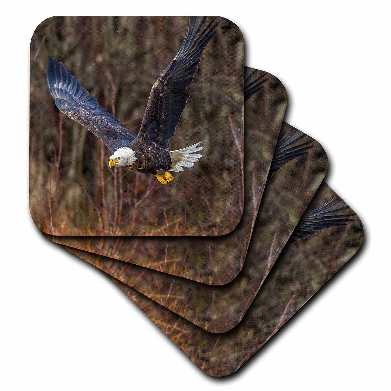 3drose Danita Delimont – Eagles – アメリカ、アラスカ州、チルカットBald Eagle Preserve、ハクトウワシAdult Flying – コースター set-of-8-Soft cst_278394_2 set-of-8-Soft  B07BH93BTC