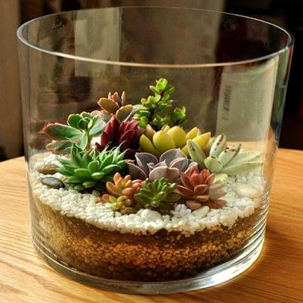Lonlier Semillas Plantas Suculentas 20 pcs Bonsai Mini Semillas para Jard/ín Huerto