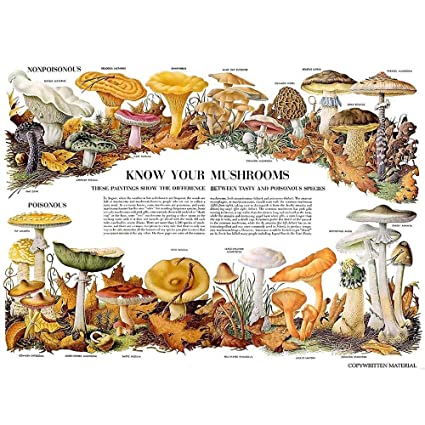 amazon com: wee blue coo science biology mycology mushroom gus toadstool  chart unframed wall art print poster home decor premium: fungi poster:  posters &