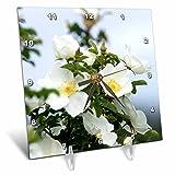 3dRose dc_23924_1 Magnoli a Blooms Desk Clock, 6