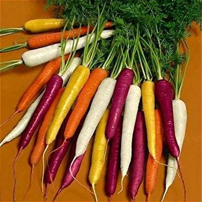 50pcs Rare Organic Rainbow Blend Carrot Seeds Heirloom Seeds Colorful Mix Vegetable Seeds Non-GMO for Home Garden Planting (#1) : Garden & Outdoor