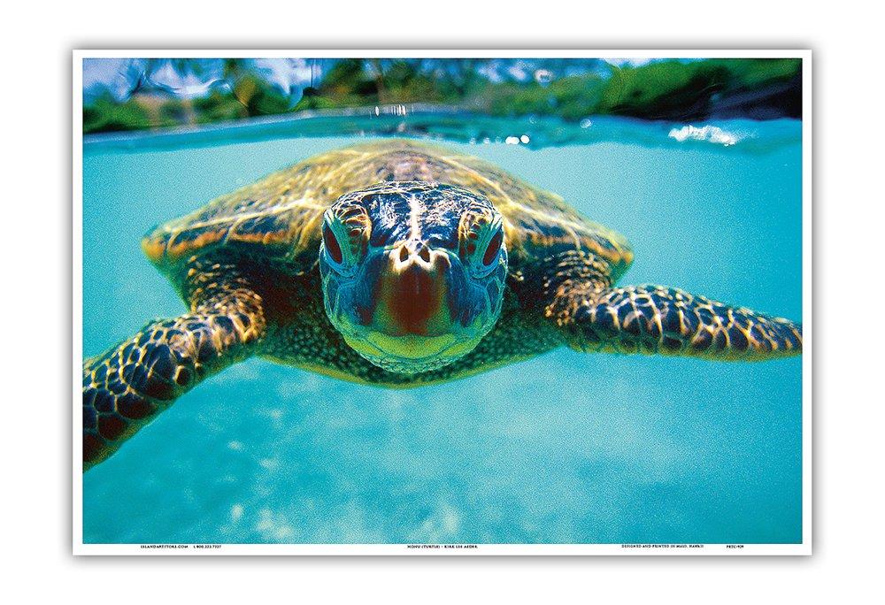 Honu (Hawaii Sea Turtle) by Kirk Lee Aeder - Hawaiian Art Poster Print, 12 X 18 Art Poster Print by Kirk Lee Aeder, 18x12 Pacifica Island Art