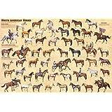 Laminated North American Horses Poster 24x36