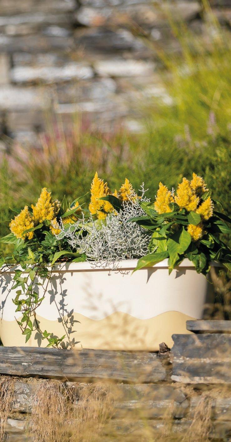 Gr/ö/ße//Durchmesser:80cm Farbe:Hell-Elfenbein Weinrot 80cm mit Selbstbew/ässerung Blumenkasten Bew/ässerungskasten Mareta 60 u