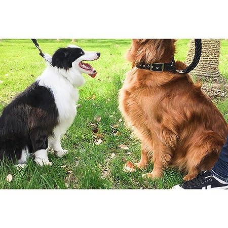 Cadena de perro Cuerda de perro Cuerda de remolque Perros medianos ...
