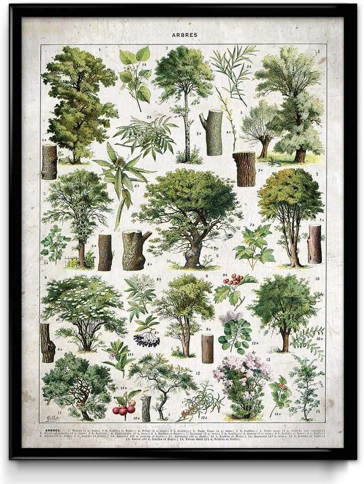 8 x 10 in Daybreak VP1092UK Illustration des Arbres Vintage Print 3 Coton