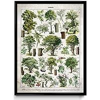 Trees Illustration VP1092UK - Impresión Vintage, algodón, Vintage