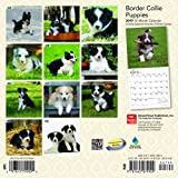Border Collie Puppies 2019 7 x 7 Inch Monthly Mini