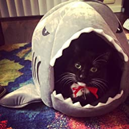 Amazon.com : Grey Shark Bed for Small Cat Dog Cave Bed Removable ...