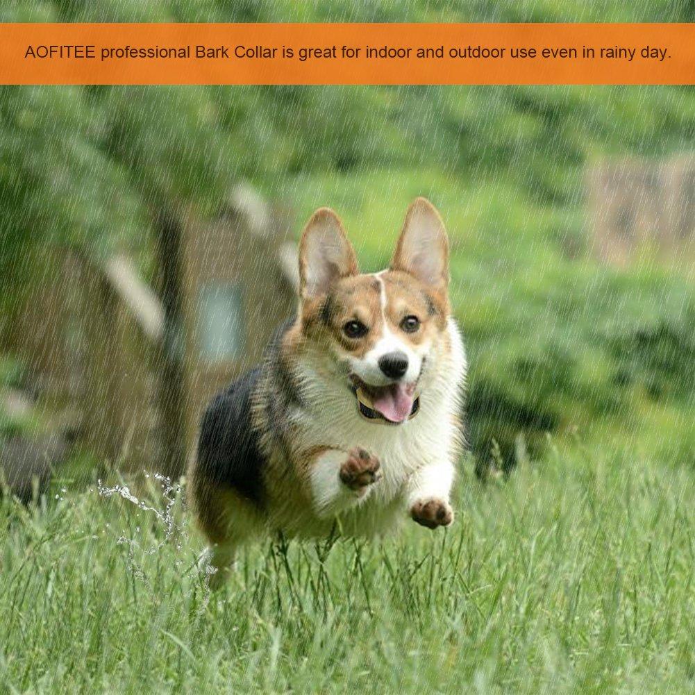 Amazon.com: aofitee perro cuello de corteza, USB recargable ...