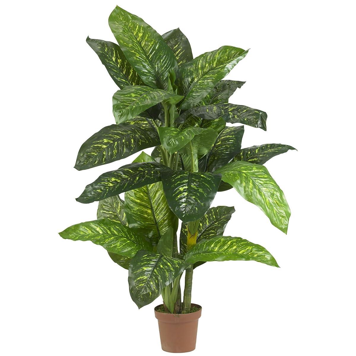 5 Dieffenbachia Silk Plant - (Real Touch)