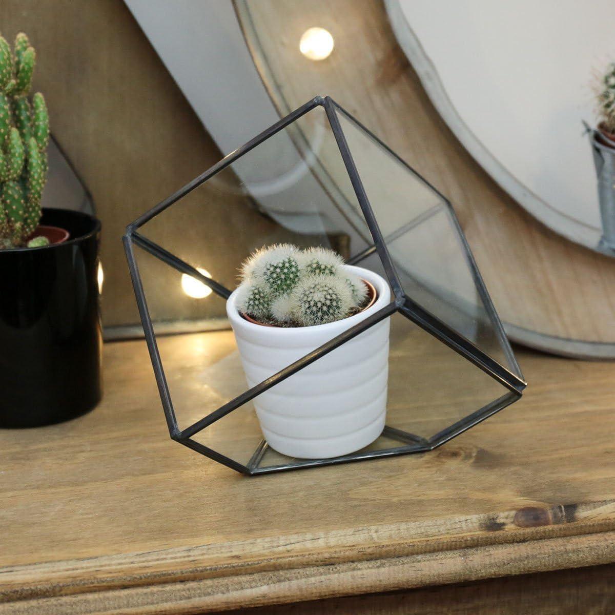 150*150*150 Pyramide de verre moderne de table pour plante sans terre et cactus