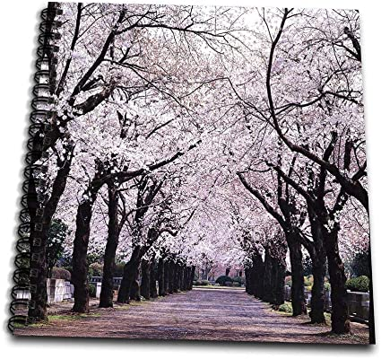 Flowers Cherry 3dRose Alexis Photography Blossoming Cherry Tree in Spring Black and White Photograph T-Shirts