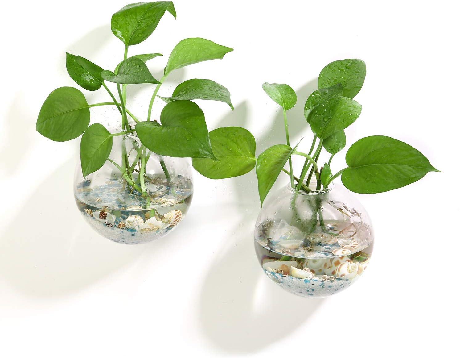 12 cm Heim- 2 St/ück perfekt f/ür die Vermehrung von Hydrokulturpflanzen Ivolador Terrarium-Beh/älter zum Aufh/ängen Garten- Glas Hochzeitsdekoration