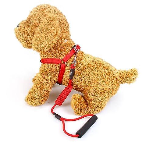 TOYM US- Teddy, tracción cuerda cuerda perro mascota cachorro de ...