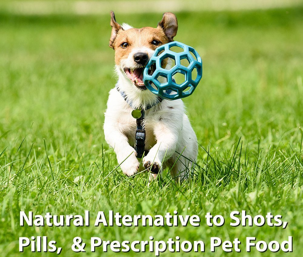 PS For Dogs 100% Hypoallergenic Dog Food - No More Paw Licking & Skin Scratching – Solves Allergies Naturally - No More Harmful Shots, Pills & Expensive Prescription Food, 5 lb