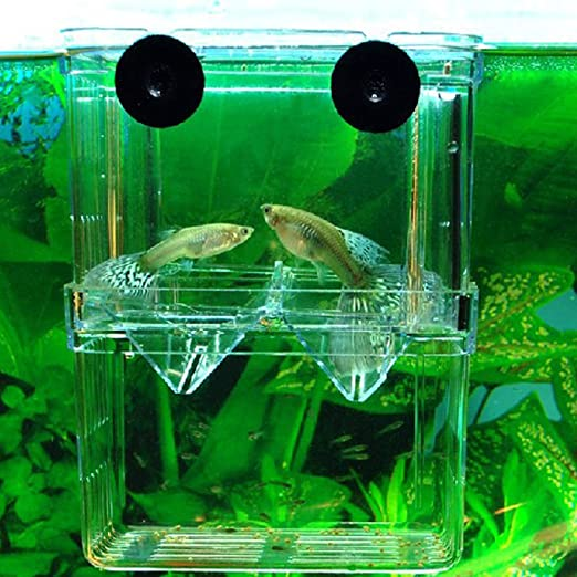 zhhyizhi Acuario Equipo auto-flotación peces Fry Cría caja: Amazon.es: Productos para mascotas