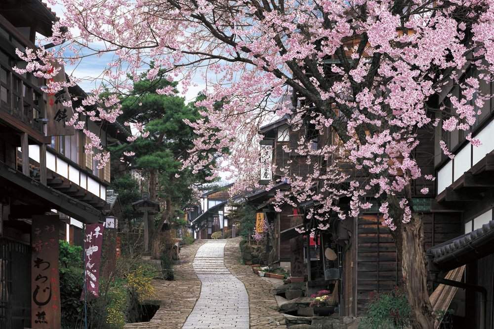 Gifu 23-564 - Magome inn fragrant berry 2016 Small piece cherry super master of the puzzle (japan import)