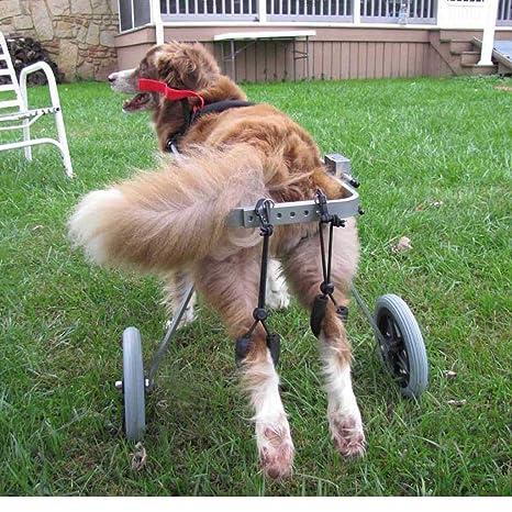 Dog wheelchair Best Friend — Silla de ruedas para perros, tamaño para perro mediano Carrito