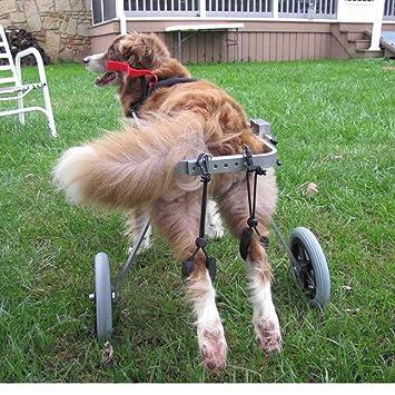 Silla de ruedas para perros, Best Friend — Silla de ruedas para perros, tamaño