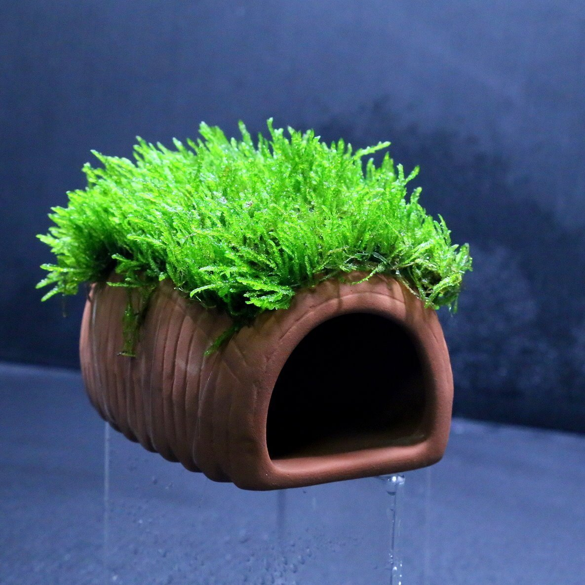 Amazon.com: Flame Moss + Ceramic Spawning Cave   Aquarium Ornament Live  Plants Fish TankNo Pesticides: Pet Supplies