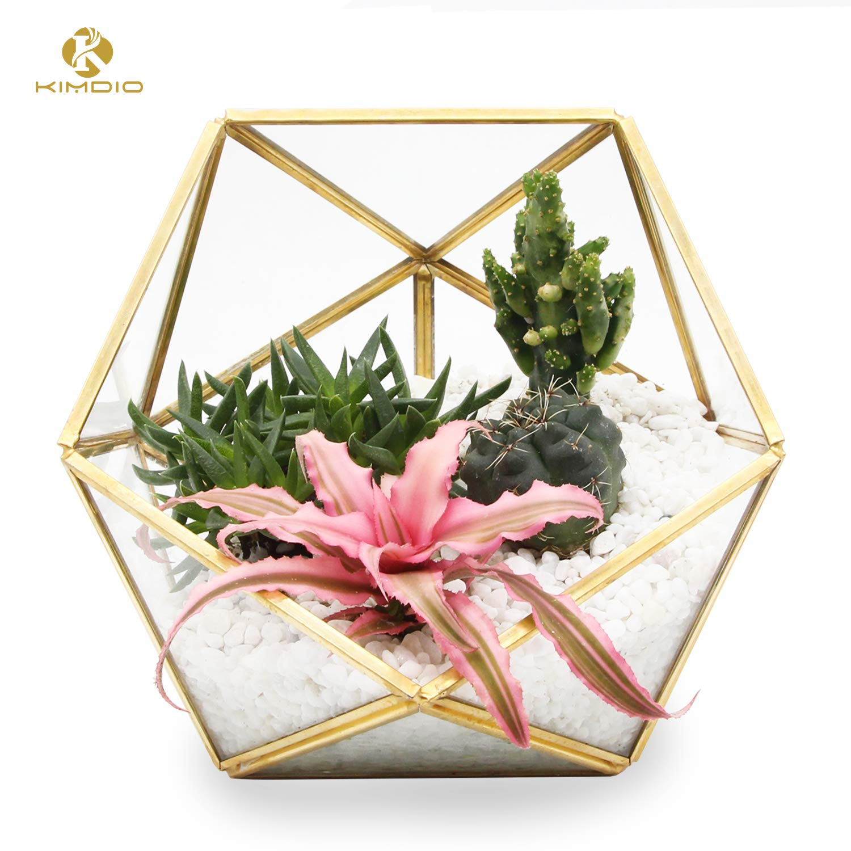 Kimdio Geometric Terrarium Clear Glass Tabletop Planter Air Plant Holder Display for Succulent Fern Moss Air Plants Holder Miniature Outdoor Fairy Garden DIY Gift (L-Gold) by Kimdio
