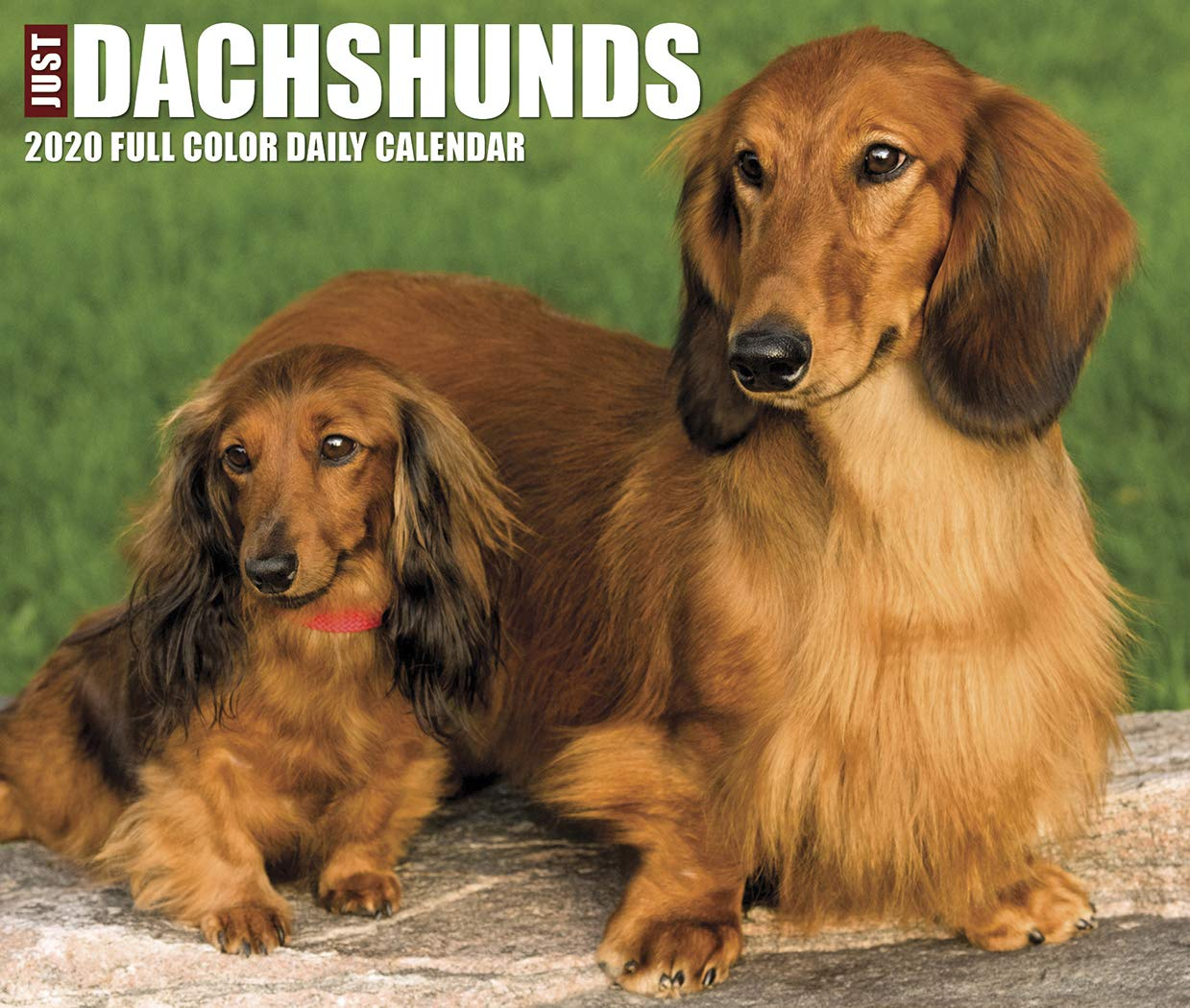 Just Dachshunds 2020 Box Calendar  Dog Breed Calendar