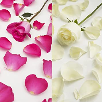 Farm fresh natural white hot pink rose petals 3000 petals farm fresh natural white hot pink rose petals 3000 petals mightylinksfo