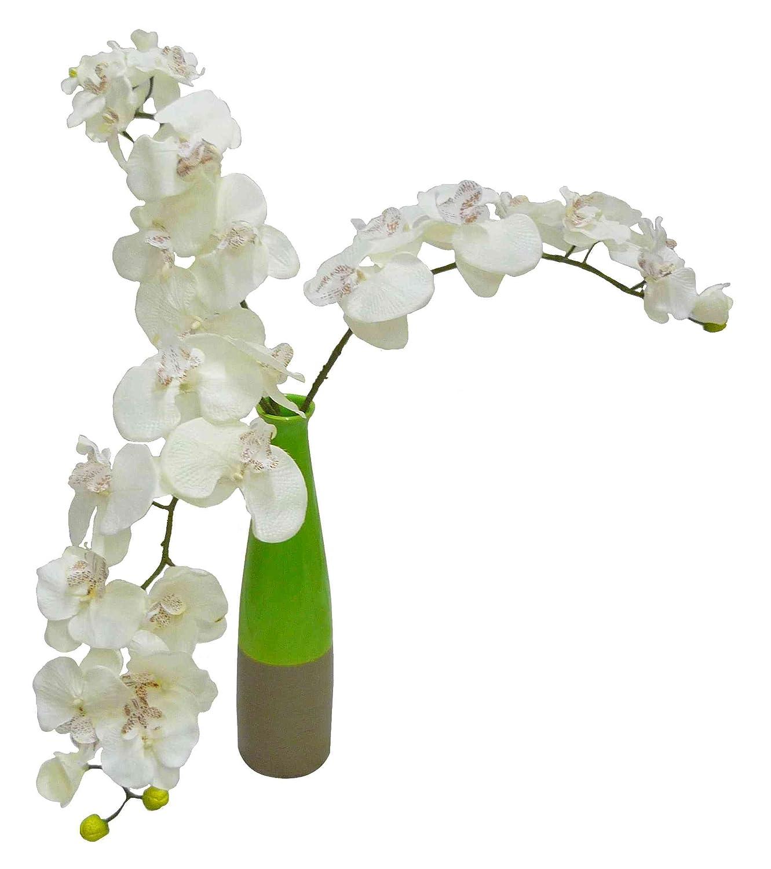 orchidee 82