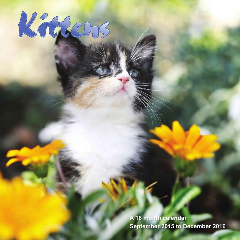 Download Kittens Calendar - 2016 Wall calendars - Animal Calendar - Monthly Wall Calendar by Magnum pdf