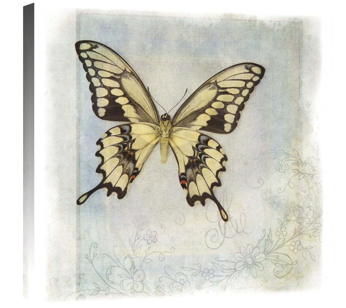 Global Gallery Debra Van Swearingen Floating Butterfly V Giclee Stretched Canvas Artwork 24 x 24