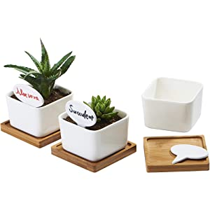 FLOWERPLUS Planter Pots Indoor, 3 Pack 3.4 Inch White Ceramic Small Square Succulent Cactus Flower Plant Pot with Bamboo Tray and Little Plants Signs for Indoors Outdoor Home Garden Kitchen Decor