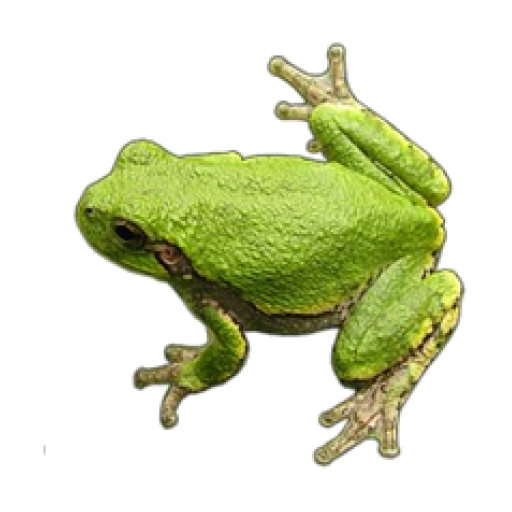 Frog Sounds (Toad Play Frog)