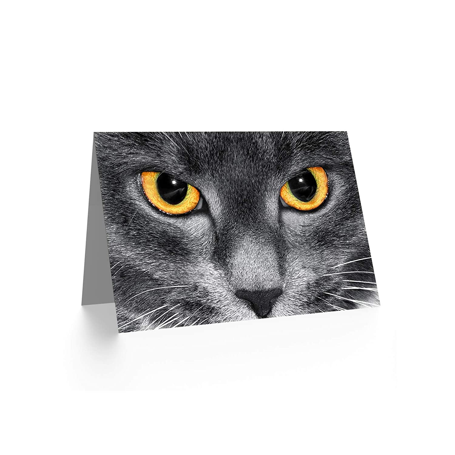 Wee Blue Coo CAT EYES PHOTOGRAPH CLOSE UP BLANK GREETINGS BIRTHDAY CARD ART