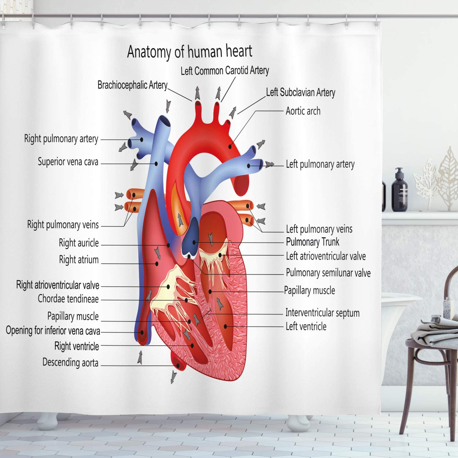 Ambesonne Educational Shower Curtain, Structure of The Heart Human Body Anatomy Organ Veins Cardiology, Cloth Fabric Bathroom Decor Set with Hooks, 75