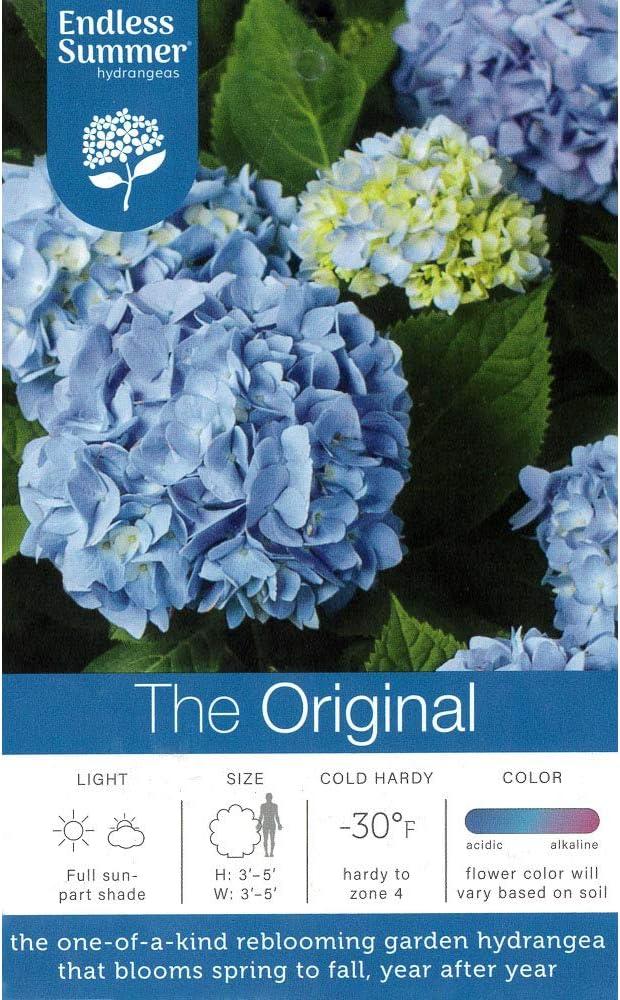 Amazon Com Endless Summer Original Hydrangea 1 Gal Original