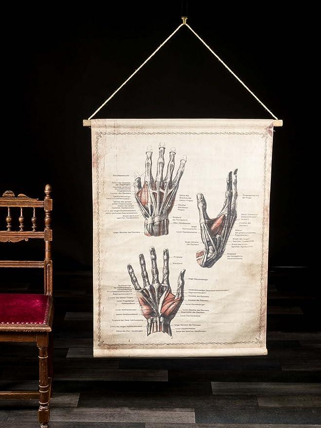 Schulkarte Lehrtafel Wandkarte Anatomie Hand historische Karte Medizin Antikstil Alte Berufe