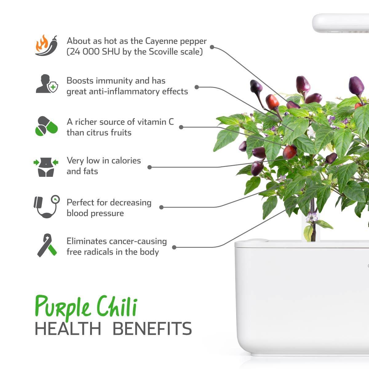 Recarga Triple de pimientos picantes morados para Smart Garden ...