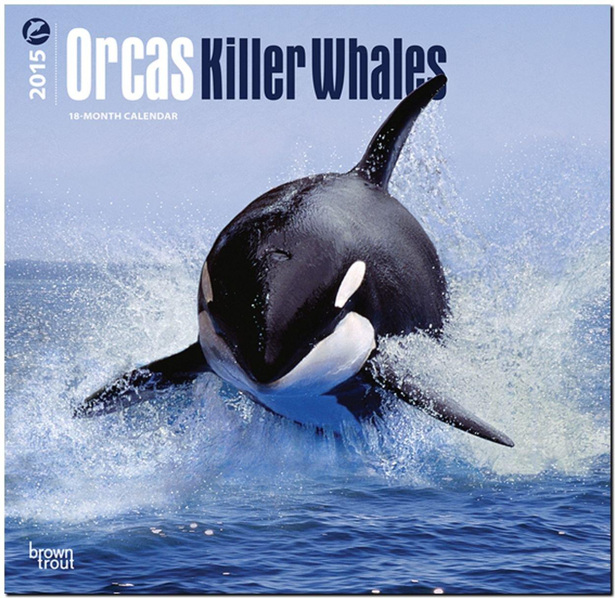 Orcas 2015 - Killerwale