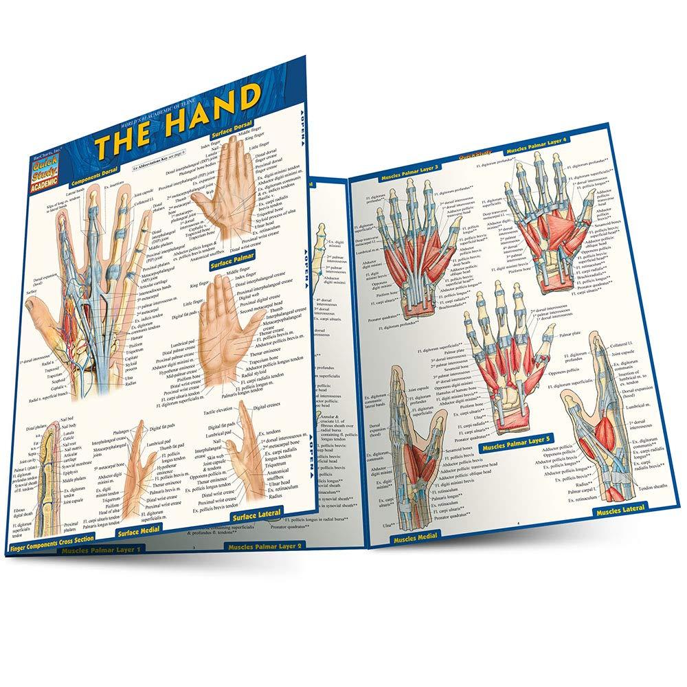 Hand Quick Study Academic