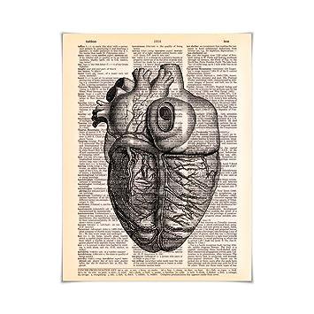 Amazon.de: TRArtStudios Seitenansicht Der Menschlichen Anatomie Des ...