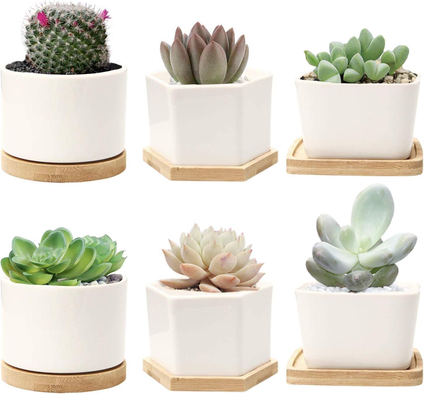 SUCCULENT POT PLANTERS 2.5 inch with Drainage Ceramic Set of 6,Tiny Porcela