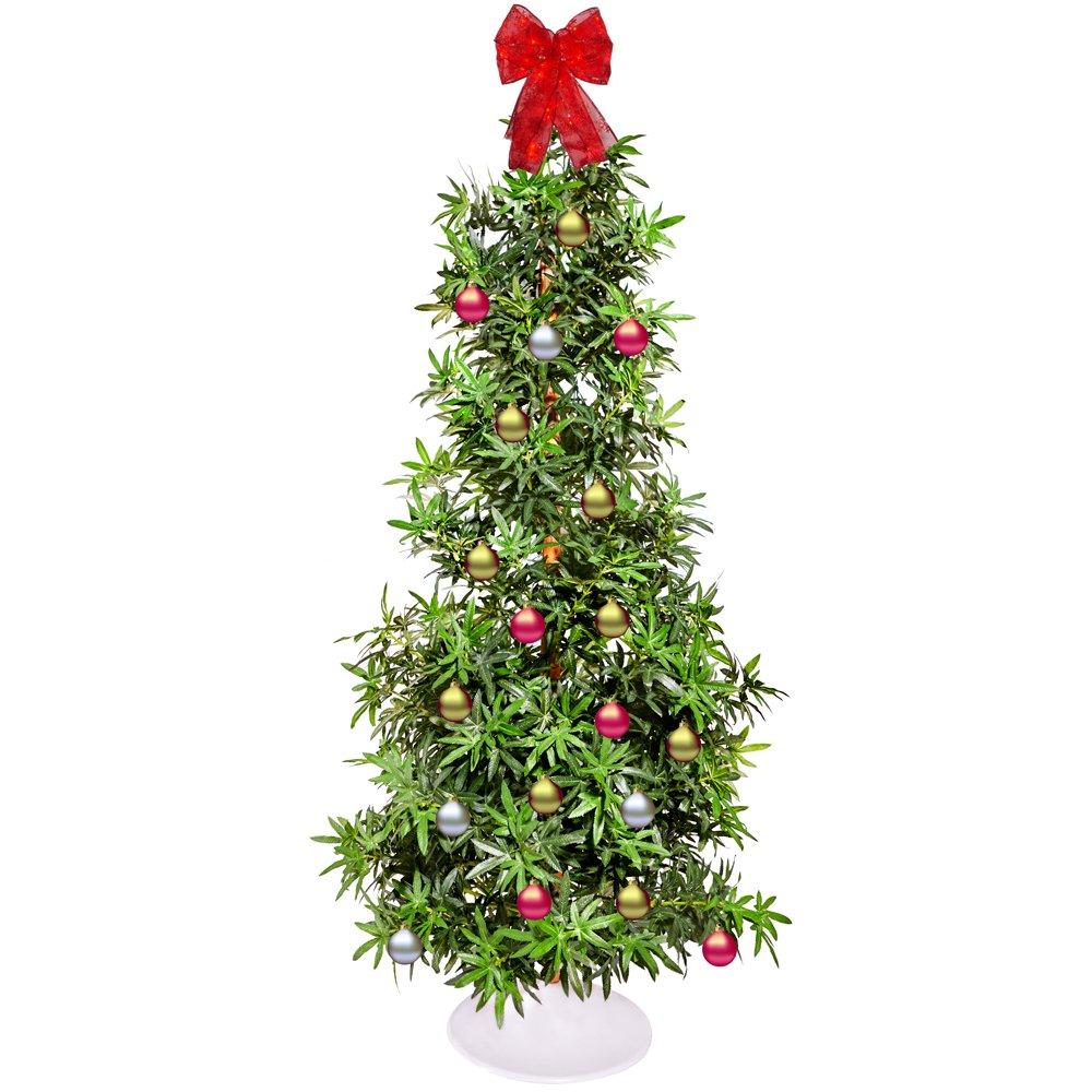 Amazon.com: Brandi Trees Weed Marijuana Leaf Artificial Christmas ...