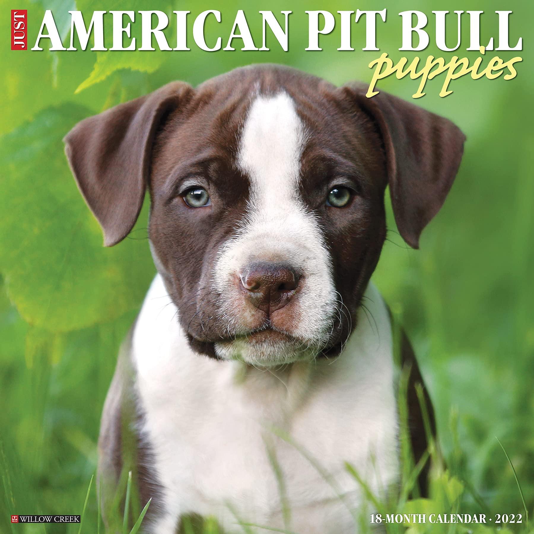 pit bull puppies 2022 calendar