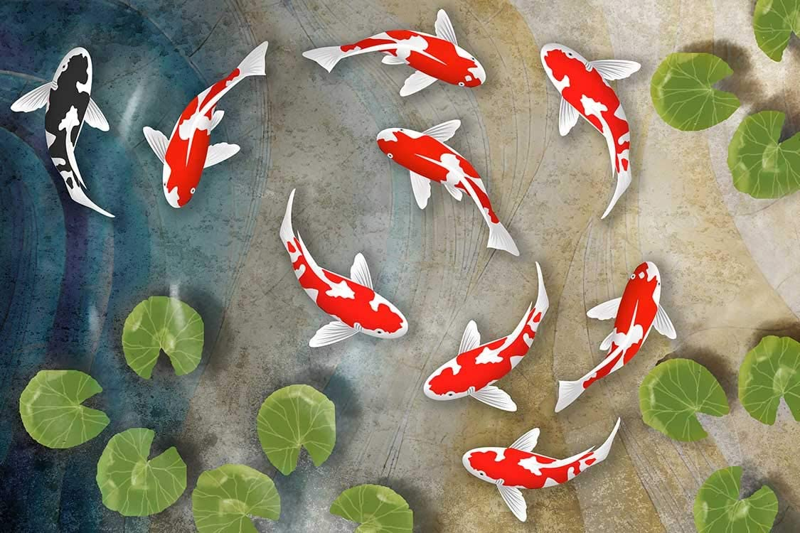 The Art Factory Feng Shui on Denver Mall Board Koi Painting Fish Phoenix Mall