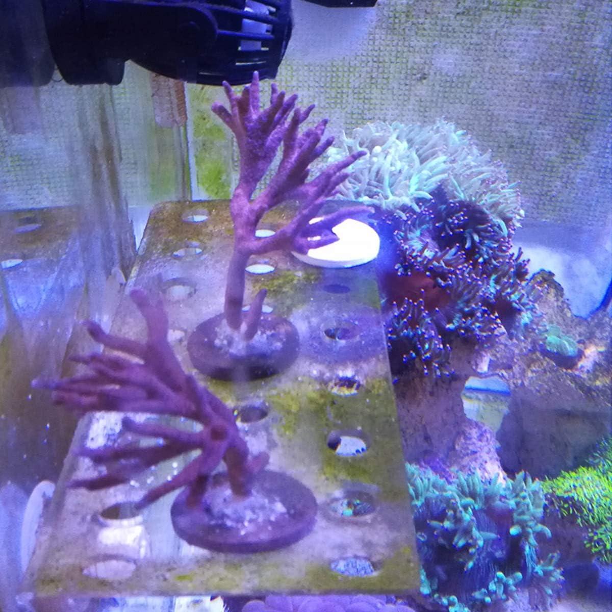 POPETPOP Acuario Coral Clip Soporte Soporte Acr/ílico 23 Hoyos para Fish Tank